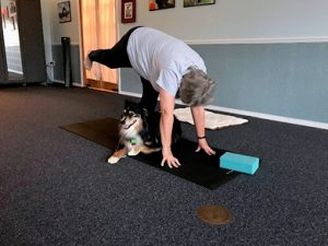 Sammy - Yoga Dog